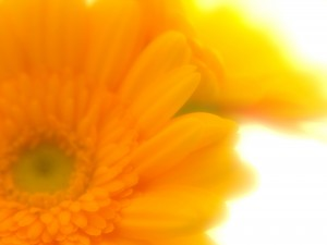 黄色い花(ペイレス)